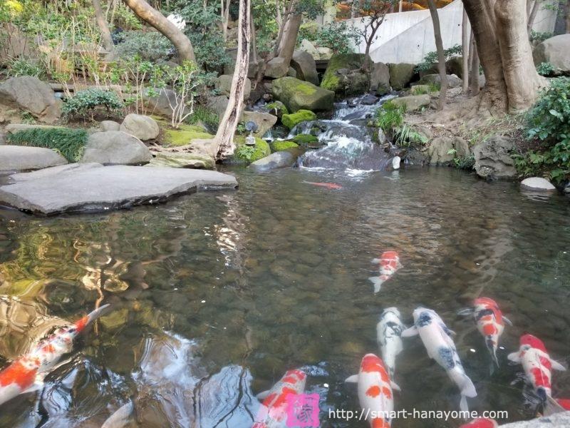 八芳園の池